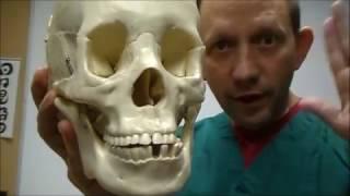 Download TMJ tricks tips and secrets Video