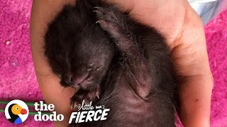 Download Watch As Kitten Smaller Than An iPhone Grows Up | The Dodo Little But Fierce Video