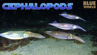 Download Super Suckers: Cephalopods! | JONATHAN BIRD'S BLUE WORLD Video