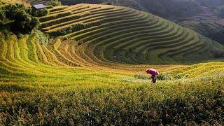 Download Introducing Vietnam Video