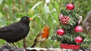 Download Movies for Cats to Watch at Christmas - Birds at The Christmas Tree Video