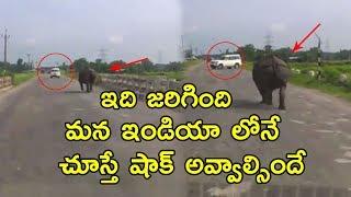 Download Hippopotamus Caught To Camera Running On Roads! | Wild Animals Found On Roads | Viral Videos Video