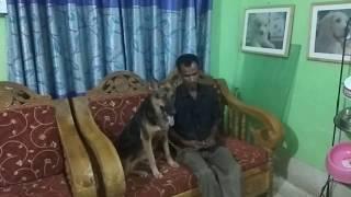 Download Vet in Dhaka City Pet Doctor in Bangladesh @ Dr. Sagir's Pet Clinic 01912251312 Video