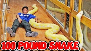 Download HOLDING THE WORLDS LARGEST SNAKE Video