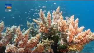 Download Great Barrier Reef - Das Paradies im Meer Video