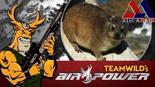 Download Airgun Hunting - Rock Hyrax in South Africa Video