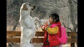 Download 狗狗意外致小主人身亡,它用自己的命弥补过错,看哭万人 Video