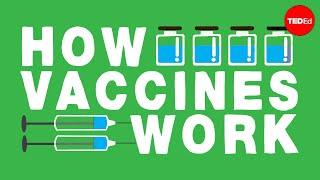 Download How do vaccines work? - Kelwalin Dhanasarnsombut Video