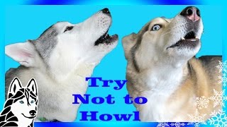 Download TRY NOT TO HOWL CHALLENGE | Try Not to Laugh | Dogs React to Howling Video