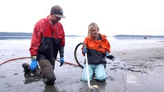Download The Curious Mussel of Seattle, Washington Video