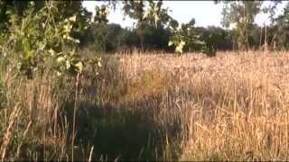 Download L'agronomie au service du désherbage - ARVALIS-infos.fr Video