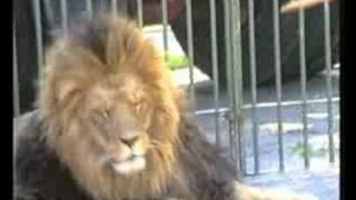 Download Vorschau: Mensch-Tier-Beziehungen im Circus (Nr. 133) Video