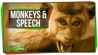 Download Why Can't Monkeys Talk Like Us? Video