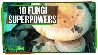Download 10 Fantastic Fungi Superpowers Video