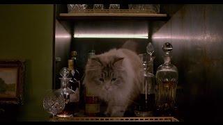 Download Drunk Cat Nine lives [funny part] Video