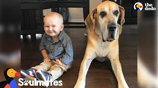 Download Massive Dog Takes Care Of His Favorite Little Boy | The Dodo Soulmates Video