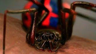 Download Peter Parker Gets Bitten By Spider - School Field Trip Scene - Spider-Man (2002) Movie CLIP HD Video