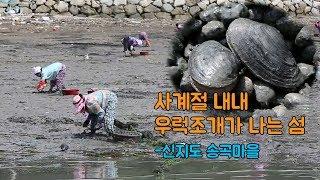 Download 일년내내 우럭조개가 나는 곳, 신지도 송곡마을 [섬섬썸] Video
