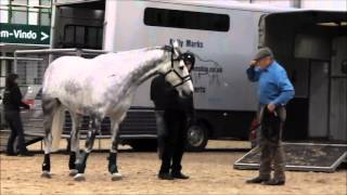 Download Monty Roberts and Freddie the non-loader at Hartpury College (2013) Video