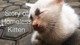 Download Story of homeless kitten-Rescue kitten Video