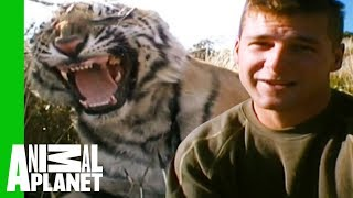 Download Tigers Make Their First Kill And Prepare For Life In Africa | Living With Tigers Video