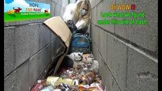 Download Oh WOW!!! Look what we found under this pile of trash!!! Please share. Video