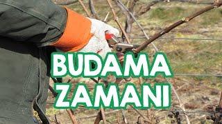 Download Meyve Ağaçlarında Doğru Budama Zamanı Video
