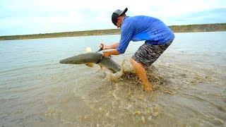 Download Wrestling GIANT Dinosaur River Fish Video