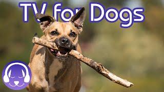 Download Walk My Dog TV! Desensitising City Walk for Dogs! Video
