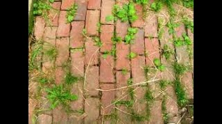 Download Homemade Weed Killer for Pathways & Driveways Kid/Pet Safe Video