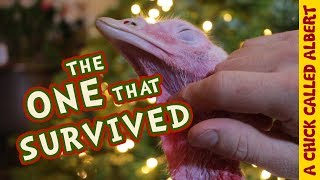 Download This Christmas I Saved A Turkey Video