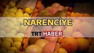 Download Narenciye - Belgesel - TRT HABER Video