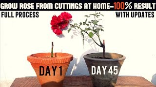 Download Easiest Way To Grow Rose From Cuttings - Start To Finish Video