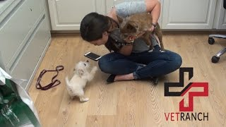 Download CUTE PUPPY OVERLOAD! Video