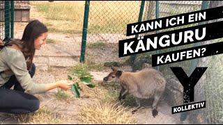 Download Tierhandel mit exotischen Tieren – Was ist erlaubt? Video