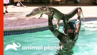 Download 6ft Gator Battles Paul In Family Pool | Gator Boys Video