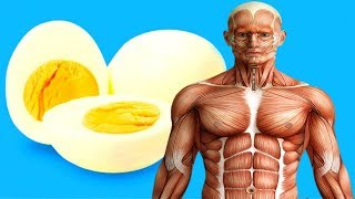 Download If You Eat 2 Eggs at Breakfast For a Month, This is What Happens to Your Body Video