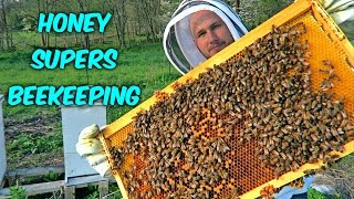 Download Adding First Honey Supers Video