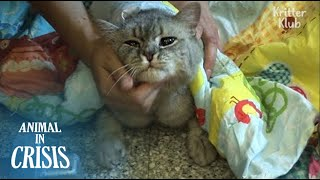Download Bullied Cat's Desperate To Eat Food Waste Even If It Could Harm Her Life | Animal in Crisis EP110 Video