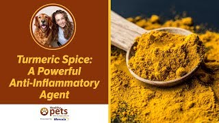 Download Dr. Karen Becker Discusses Turmeric Video