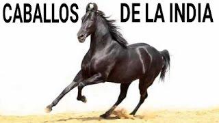 Download EXPO SHOW DE CABALLOS RAZA MARWARI HORSES Video