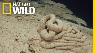 Download Watch Underwater Worms Poop — A Lot | Nat Geo Wild Video
