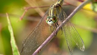Download Dragonfly - from 24 mm to 1,200 mm (RX10 Mark IV) Video