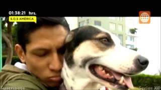 Download Domingo Al Dia - Las mascotas rescatadas por los famosos - 25-10-2015 | followperu Video