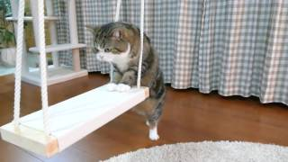 Download ブランコとねこ。-Swing and Maru.- Video