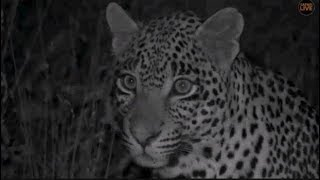 Download Pt 2 Safari Live's Sunset Safari Drive at 5:56 PM on April 25, 2018 ( Tingana & Hosana ) Video