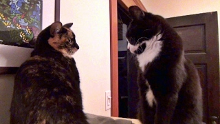 Download 10 Fun Facts About The Kits Cats Video