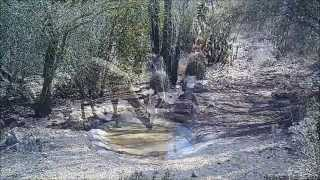 Download Trail cam video from Tucson, Arizona Video