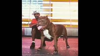 Download THE HULK LIFE: Is HULK the most famous dog in the world right now? hes so gentle Video