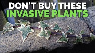 Download 16 Invasive Species Sold at Garden Centers You Should Never Buy Video